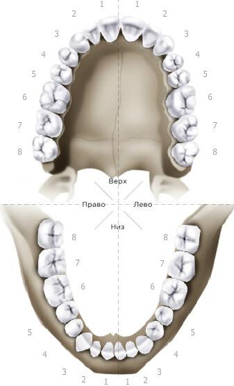 Иображение челюсти